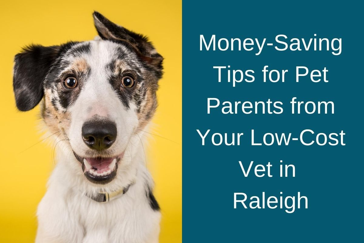 Money-Saving Tips for Pet Parents from Your Low-Cost Vet in Raleigh